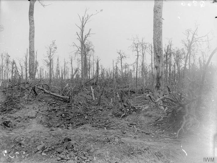 Mametz-Wood-August-1916-IWM-Q866